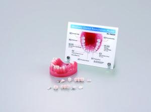 補綴物説明用模型(プレート付き)[PE-PRO020]の写真